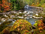 AUTUMN FOREST STREAM