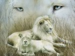 White lion couple