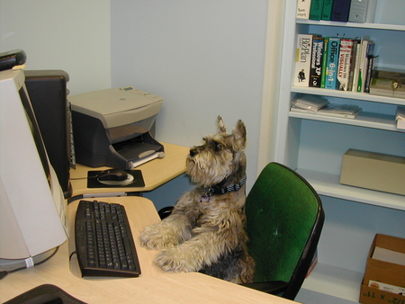 Now.....How Do I Send An Email Again? - computer, chair, desk, funny, dog