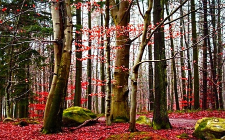 Reddish Forest - ray, beauty, light, forest, trees, nature
