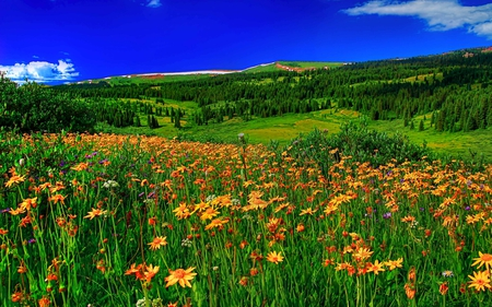 Summer - colorful, hills, grass, peaceful, landscape, flowers, blue, sky, colors, splendor, summer, mountains, nature, trees, beauty, beautiful, lovely, summer time, flowers field, clouds, field, field of flowers, view