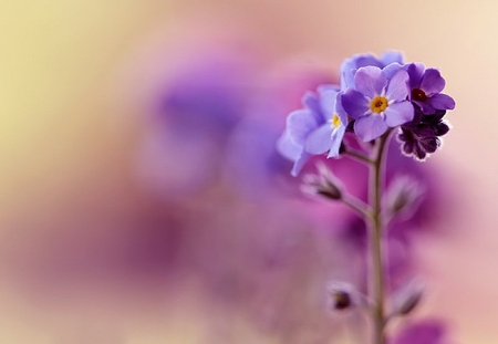 Purple flower flowers nature background wallpapers on desktop purple flower pretty beauty pink lovely violet beautiful purple mightylinksfo