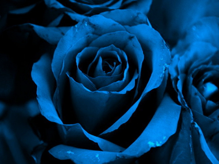 Sapphire rose photography abstract background wallpapers on desktop nexus image 771672 - Sapphire wallpaper ...