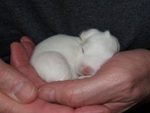 Baby bunny safe in Loving Hands