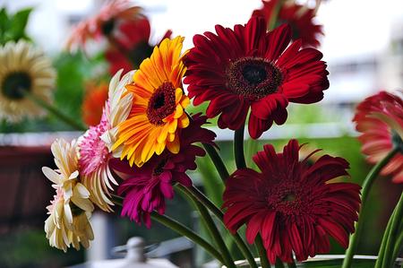 Good Morning ,Friends ! - flowers, beautiful, colours, gerbera daisies