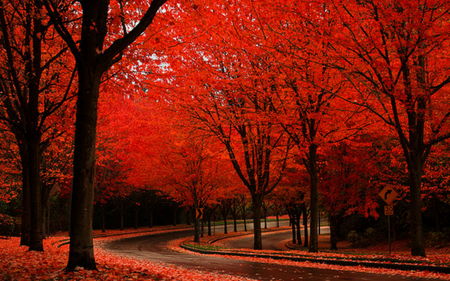 Autumn Colors - grass, peaceful, tree, red, forest, way, autumn, road, colors, splendor, street, nature, trees, fall, woods, red autumn, beauty, beautiful, lovely, pretty, rainy, view, autumn colors, rain, leaves