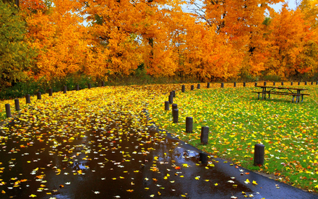 Carpet Of Leaves - colorful, peaceful, walk, path, park, autumn, road, sky, fall, romance, carpet of leaves, shower, rainy, leaves, grass, romantic, tree, way, saturating, colors, splendor, autumn leaves, trees, nature, yellow, carpet, beauty, beautiful, lovely, bench, pretty, green, view, autumn colors, rain