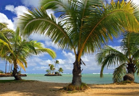 Island - ocean, clouds, sky, island, palms, beach