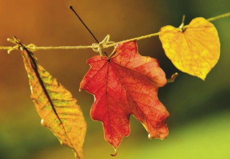 happy autumn - leaf, ribbon, leaves, colorful, nature, tree, autumn