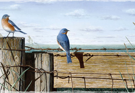 Singing the Blues - Bluebirds F2 - fence, art, bluebirds, birds, artwork, barbed wire, painting, wide screen, wildlife, stevens, gene stevens