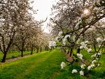 Lovely Orchard