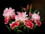 Beautiful Pink flower in Painting
