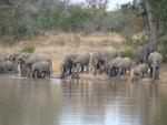 Elephant Family gathering