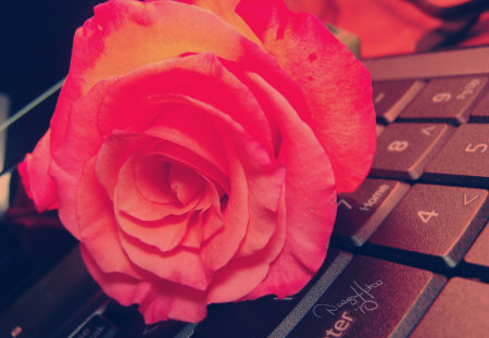 Keyboard Rose for My On Line Friends