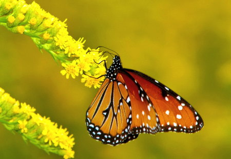 Spotted beauty - spotted, butterfly, green, orange, yellow flower, black, white