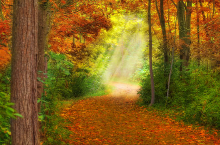 Autumn - beauty, lovely, woods, forest, magic, pretty, green, beautiful, road, trees, nature, way, peaceful, path, autumn colors, fall, carpet of leaves, sunlight, autumn, grass, view, colors, rays, light, leaves, splendor, carpet, tree