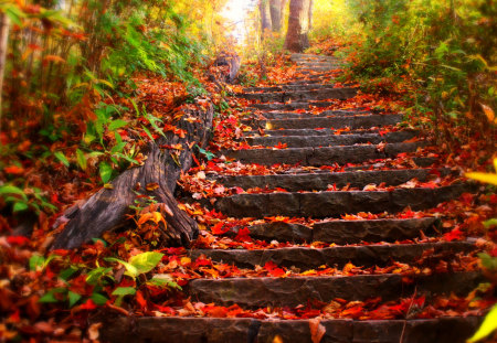 Autumn Leaves - beauty, lovely, woods, stairway, forest, magic, pretty, leavess, red, beautiful, trees, nature, stairs, way, peaceful, path, autumn colors, fall, carpet of leaves, autumn, grass, colors, leaves, splendor, carpet, tree