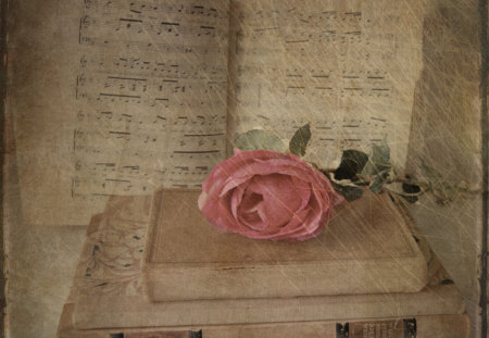 Pink Rose to Lovers of Reading - Photography & Abstract Background