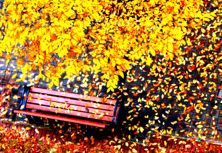 Autumn Leaves - colorful, peaceful, romantic, tree, path, shade, park, alley, way, autumn, road, colors, splendor, autumn leaves, nature, trees, fall, fallen, carpet, yellow, beauty, beautiful, lovely, carpet of leaves, romance, bench, autumn colors, leaves