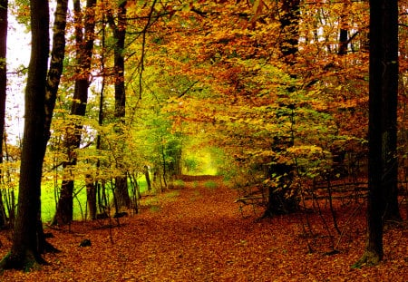 Autumn carpet - autumn, background, beautiful, trees, carpet, leaves, nature, forests, sesons