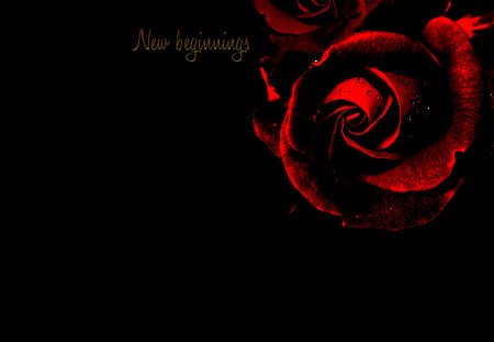 Dark Red Roses Photography Abstract Background Wallpapers On Desktop Nexus Image 789433