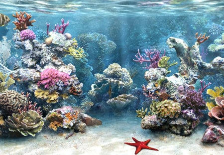 Aquarium - starfish, water, fish, coral, aquarium