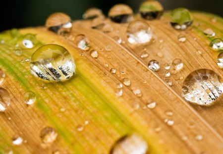 Rain Drops - drops, rain