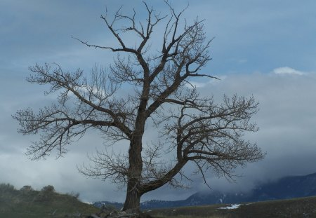 Standing Against the Storm - tree, cloudy, mountains, branches, sky, sentinel, stormy