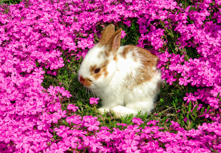 Bunny Hdr Rodents Animals Background Wallpapers On Desktop Nexus Image 790447