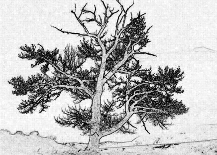 Steadfast Sentinel - black and white, tree, sentinel, drawing