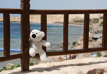 Don't forget me!!! - teddy, bear, fence, beach