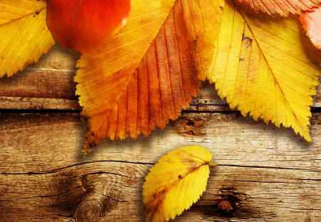 colors of autumn - yellow, fall, leaves, nature, autumn
