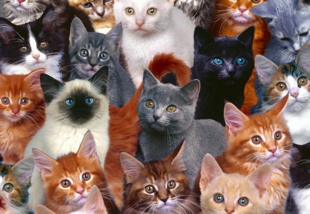 We wish You a purrrfect Birthday - variety, brown, orange, grey, black, colors, white, cats