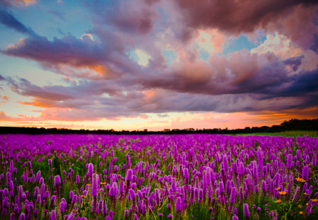 Lavender Field - colorful, grass, peaceful, landscape, flowers, sunset, sky, colors, splendor, lavender field, lavender, nature, trees, beauty, beautiful, lovely, purple, flowers field, clouds, field, field of flowers, field of lavander, green, view