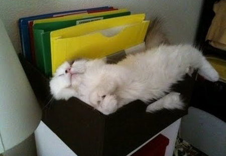 Filed Kitty Cats Animals Background Wallpapers On Desktop Nexus