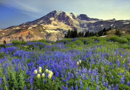 Mountain landsape - flowers, hill, nature, landscape, mountain