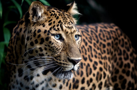 Prowess - beautiful, sleek, leopard, powerful