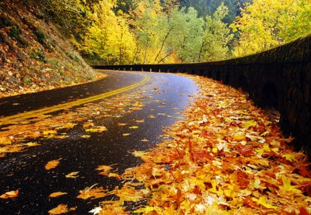 Autumn Road - highway, peaceful, tree, forest, mountain, way, autumn, road, colors, splendor, autumn leaves, nice, mountains, meandering, nature, trees, fall, beauty, beautiful, lovely, cliffs, foliage, pretty, rainy, falling, view, autumn colors, rain, leaves