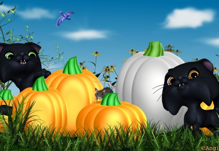 Playing in the pumpkins - autumn, holiday, halloween, pumpkin, cat, animal, toon