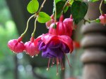 Pretty-Fuchsia