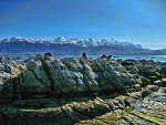 Seal Colony, Kaikoura, South Island, New Zealand