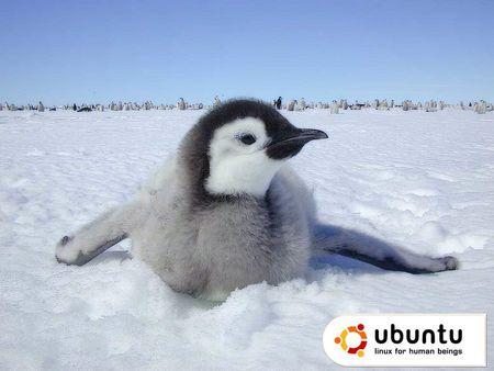 ubuntu baby penguin - penguin, pinguinito, ubuntu