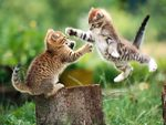 Kittens - One Airborne in Mid-Attack
