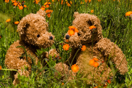 teddy summer - grass, orange, teddy, summer, flowers