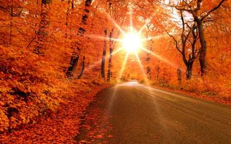Autumn Road - peaceful, beije, day, image, sun, orange, pathway, brightness, paysage, road, sky, sunrays, scene, maroon, photoshop, woods, cool, trail, carpet of leaves, black, photography, panorama, tree, way, sunny, colors, splendor, scenic, autumn leaves, trees, roots, nature, lovely, cena, pretty, paisaje, picture, colorful, light, sunlight, white, beautiful day, path, amazing, forest, lightness, asphalt, branches, colours, carpet leaves, awesome, autumn sun, autumn, sunrise, fall, forests, infinite, rays, scenery, leaf, seasons, beam, fullscreen, scenario, leaves, maple, paisage, magic, paisagem, cenario, autumn road, twilight, landscape, nice, bright, carpet, beauty, beautiful, peisaje, stars, trunks, wood, dusk, grove, view, autumn colors, photo
