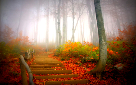 Autumn - colorful, peaceful, path, misty, forest, fog, park, mornig, autumn, fall, woods, carpet of leaves, leaves, grass, magic, tree, red, stairs, landscape, mist, way, splendor, autumn leaves, trees, nature, carpet, beauty, beautiful, lovely, foggy, pretty, view, foggi, autumn colors