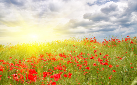 Poppies Field - colorful, grass, red flowers, sunlight, peaceful, red, sun, poppy, poppies, landscape, sunny, flowers, sky, colors, splendor, summer, sunrays, nature, poppies field, beauty, beautiful, lovely, rays, summer time, flowers field, clouds, field, field of flowers, pretty, green, view