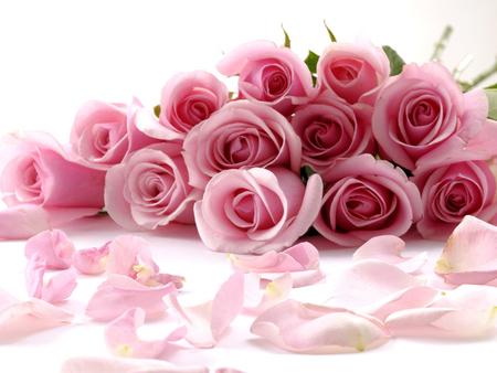 birthday roses for susana chu41 flowers nature background
