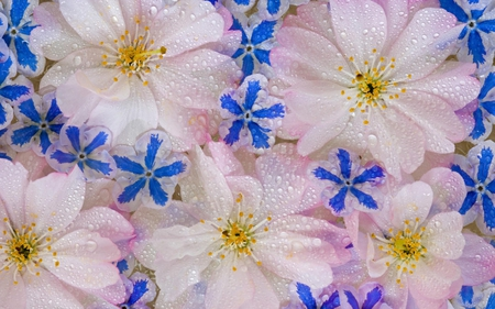 Flowers - flowers, flores, blue, albastru, water, nature, rocio, fleurs, flori, aqua, apa, dew, azul, roua, rosee