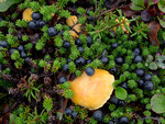 Berries and mushrooms